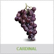 Frutta da tavola raggi vivai cesena - Vivai uva da tavola ...